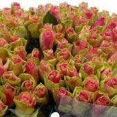 Schnittblumen : Rosen Bellerose